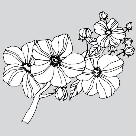 graphic flowers, without color Ilustracja