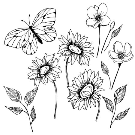 a set of graphic drawings of flowers of chamomile, butterfly