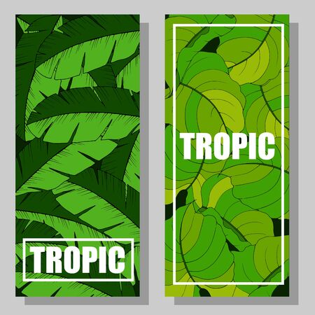 banner for text, greetings with exotic tropical leaves Illustration