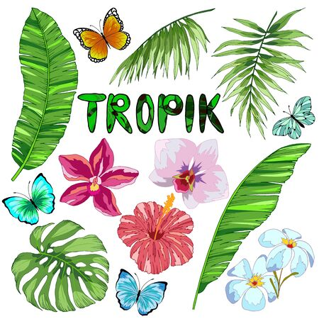 set of tropical leaves, flowers and butterflies