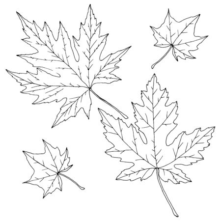 Set of maple leaves in monochrome colors