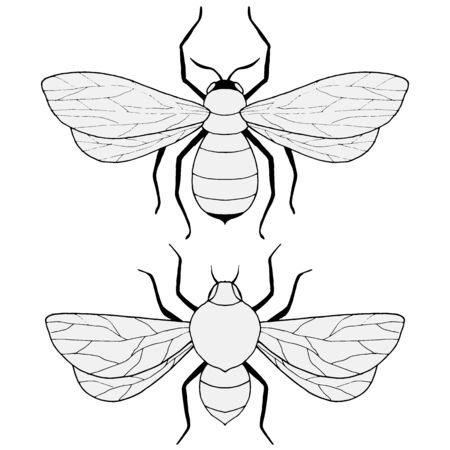 drawings of bees in black and white, vector illustration, isolate