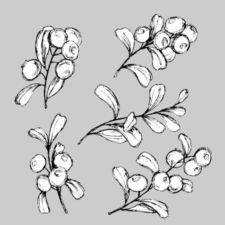 vector illustration, set with drawings of branches with berries in black and white