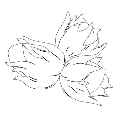 vector illustration, black and white cartoon nuts, coloring 일러스트