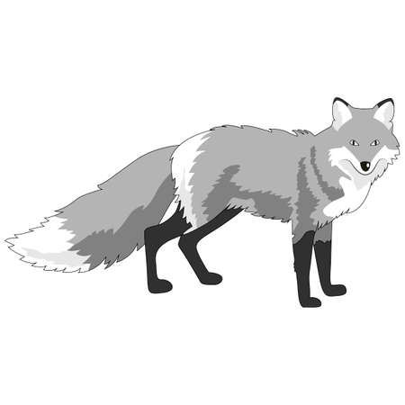 fox image, monochrome picture, isolate on a white background, vector illustration