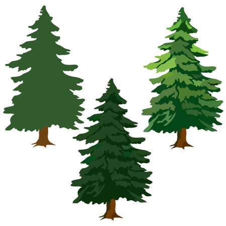 fir trees, drawing pictures, green fir trees, vector illustration, isolate on a white background Vectores