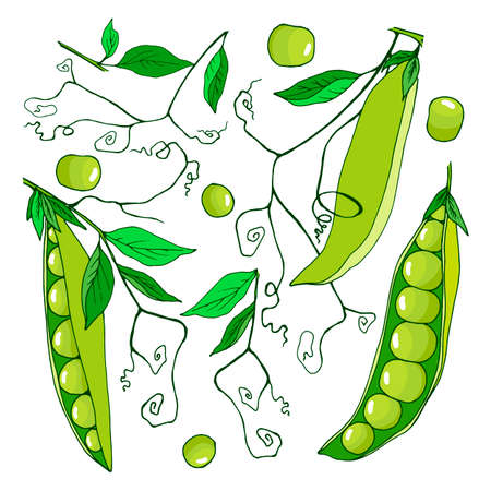 set of elements of fruits and leaves, stalks of peas, vector illustration, isolate on a white background