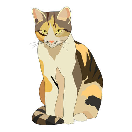 vector illustration, drawing of a cat, isolate on a white background