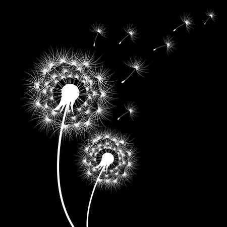 silhouettes of dandelions in black, vector illustration for different design Ilustração