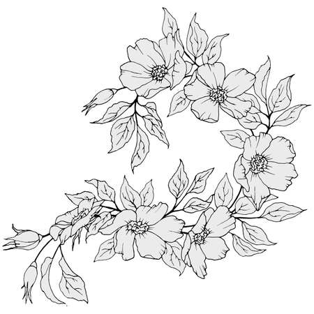 branch with flowers and leaves in monochrome colors, isolate on a white background