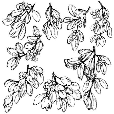 drawings with branches with leaves and berries in monochrome colors, isolate on a white background
