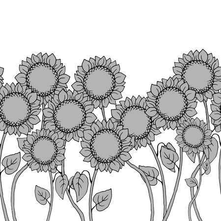Seamless pattern in gray colors with flowers of sunflower, border 矢量图像