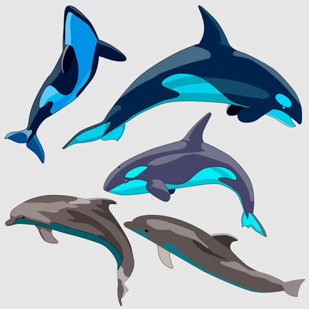 set of dolphin drawings, isolates on a white background