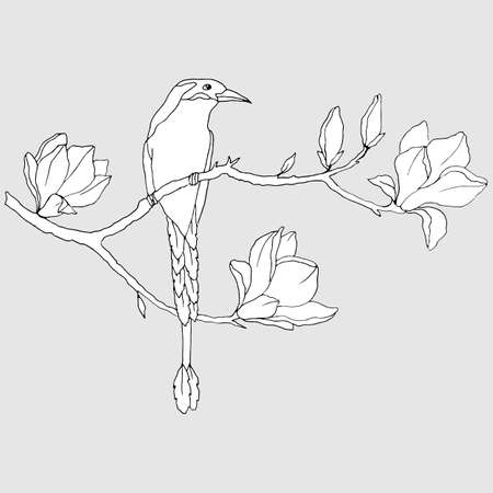 black and white linear drawing, bird on a branch with magnolia flowers 向量圖像