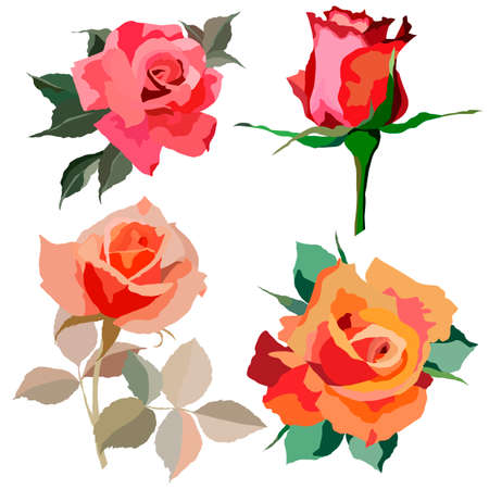 set of roses in bright colors, isolate on a white background