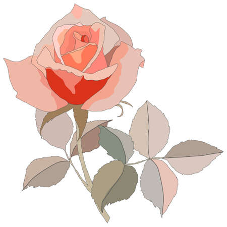 rose in pastel colors, isolate on a white background