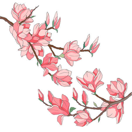 branches with magnolia flowers, drawing in bright colors, isolate on a white background
