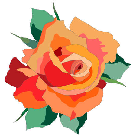 rose in bright colors, isolate on a white background