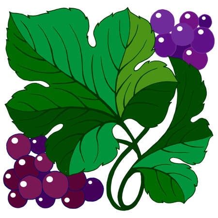 stylized grapes with leaves, element for decoration, isolate on a white background
