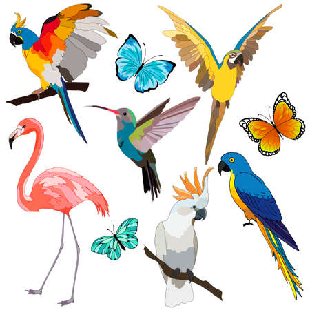 set of tropical birds and butterflies, isolate on a white background, bird for clothing design, bright parrots