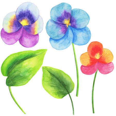 Watercolor illustration, set of flowers and leaves of viola, isolate on a white background, elements for decoration of wedding invitations, greetings and cards