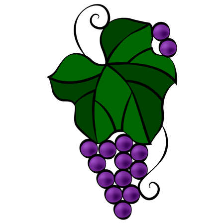 Grape leaf and berries in doodle style, simple vector illustration, design ornament, linear pattern in bright colors, isolate on a white background