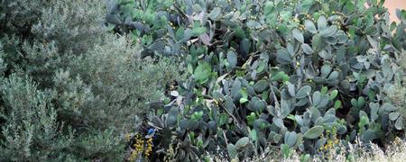 algeria: Algeria Plants