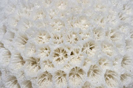 Detail view of white coral structure