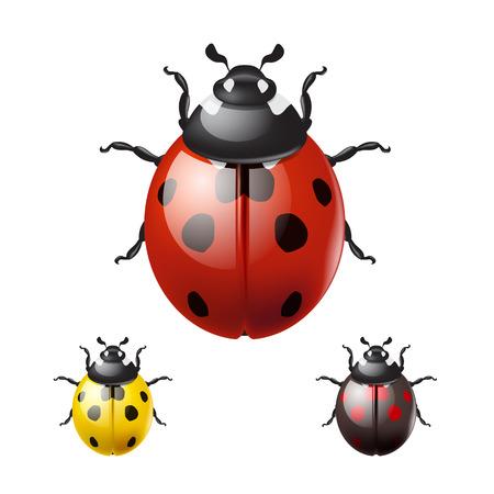 Ladybug isolated on white background.  Vettoriali