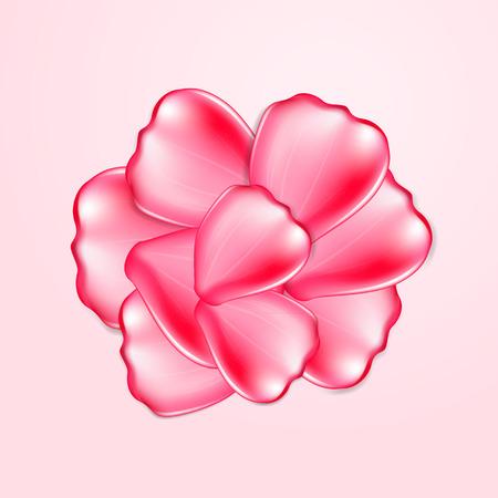 pink rose petals: Beautiful pink rose petals
