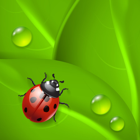 Green background with ladybird and dew  Illustration