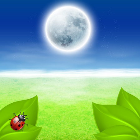 Background with full moon, green grass and ladybird  Vector