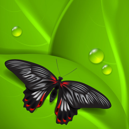 Green background with butterfly and dew.  Vector