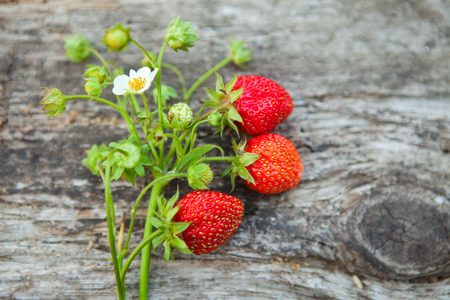 Close up of strawberry on rustic wooden table photo
