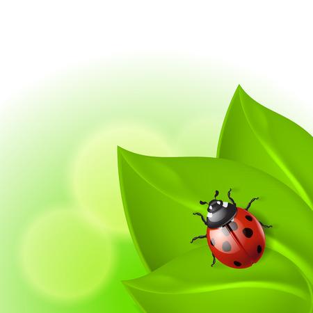 ladybird: Green background with ladybird.