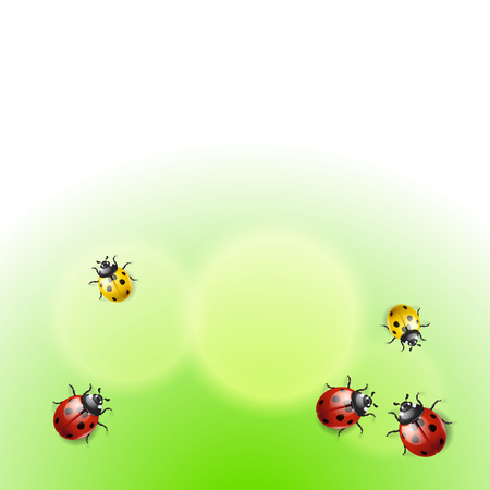 fleck: Green background with ladybirds.