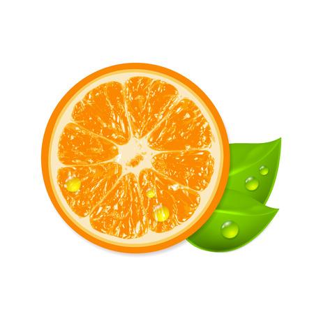 Fresh orange isolated on white background. EPS10 vector.