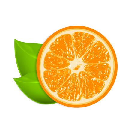photorealistic: Fresh orange isolated on white background. EPS10 vector.