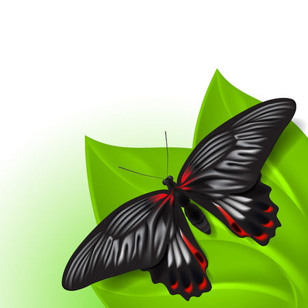 fleck: Summer background with butterfly.   Illustration