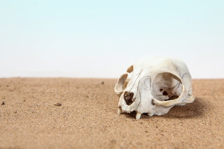 Skull of cat is half-buried in desert sand with place for text Stock Photo