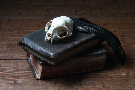 witchcraft: Cat skull, old books and crow quill on old wooden desk. Vintage witchcraft still life.