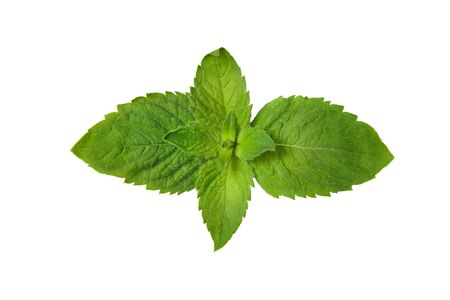 Green mint leaves isolated on white Stok Fotoğraf