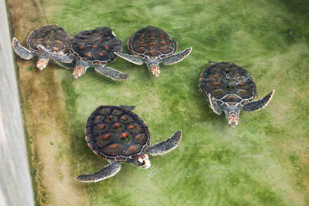 Turtles in the water in the botanical garden. Top view. Stock Photo