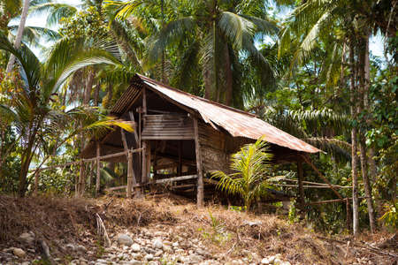 Very old ruined hut in a palm forest in Thailand.
