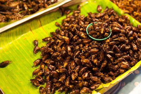 Thai food at market. Fried insects mealworms for snack. Stock Photo
