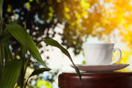 White cup of coffee or tea on a wooden table over blurred tree with sun lighting.