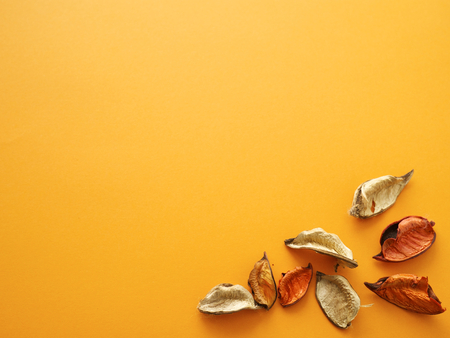 beechnuts on orange background