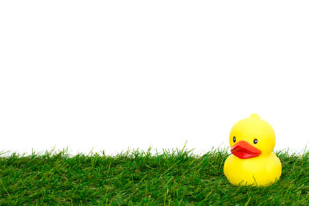 cute baby yellow duck isolated on white background and grass photo