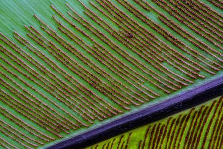 spore: spore of fern leaf in macro mode