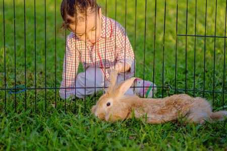 Mix lionhead rabbit  at green background